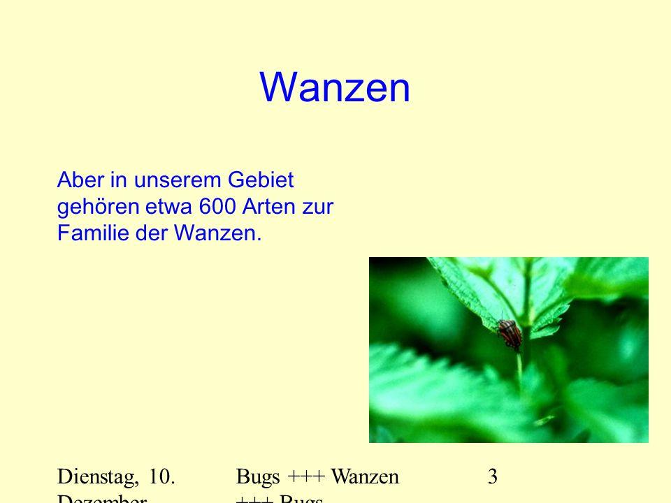 Dienstag, 10. Dezember 2013 Bugs +++ Wanzen +++ Bugs 3 Wanzen Aber in unserem Gebiet gehören etwa 600 Arten zur Familie der Wanzen.