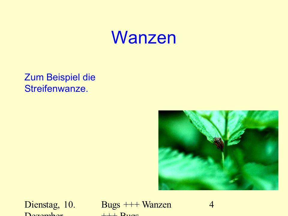 Dienstag, 10. Dezember 2013 Bugs +++ Wanzen +++ Bugs 4 Wanzen Zum Beispiel die Streifenwanze.