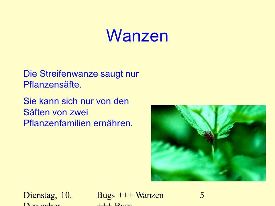 Dienstag, 10. Dezember 2013 Bugs +++ Wanzen +++ Bugs 5 Wanzen Die Streifenwanze saugt nur Pflanzensäfte. Sie kann sich nur von den Säften von zwei Pfl