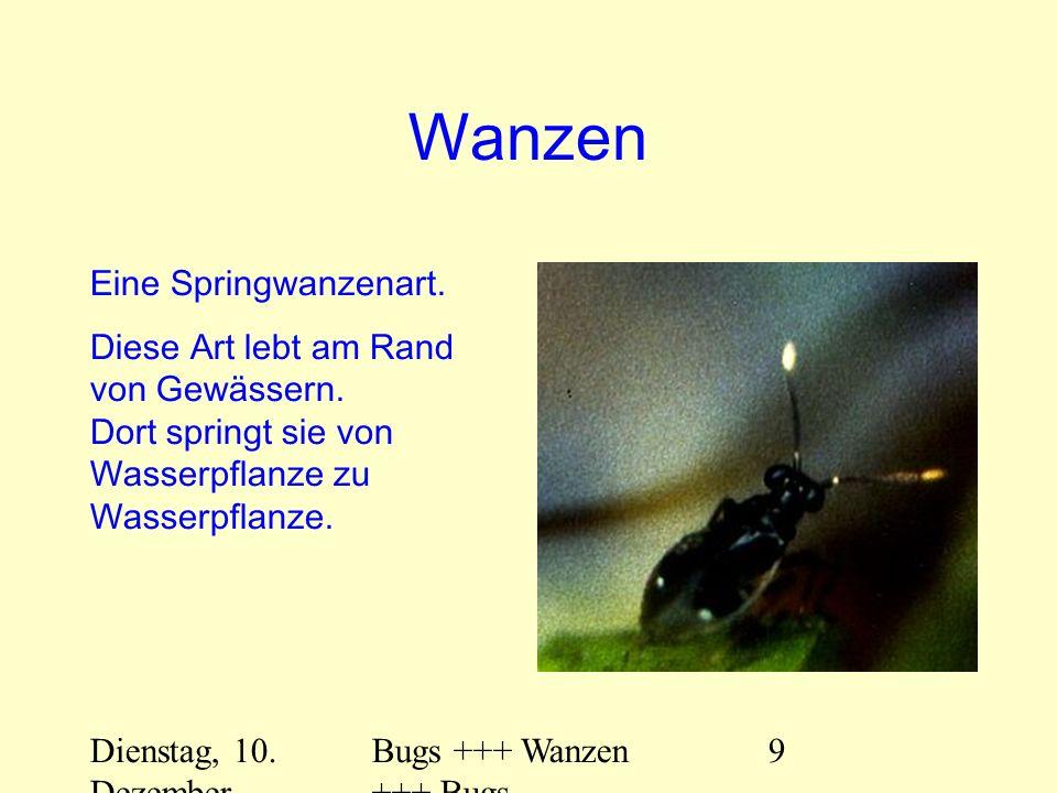 Dienstag, 10. Dezember 2013 Bugs +++ Wanzen +++ Bugs 9 Wanzen Eine Springwanzenart. Diese Art lebt am Rand von Gewässern. Dort springt sie von Wasserp