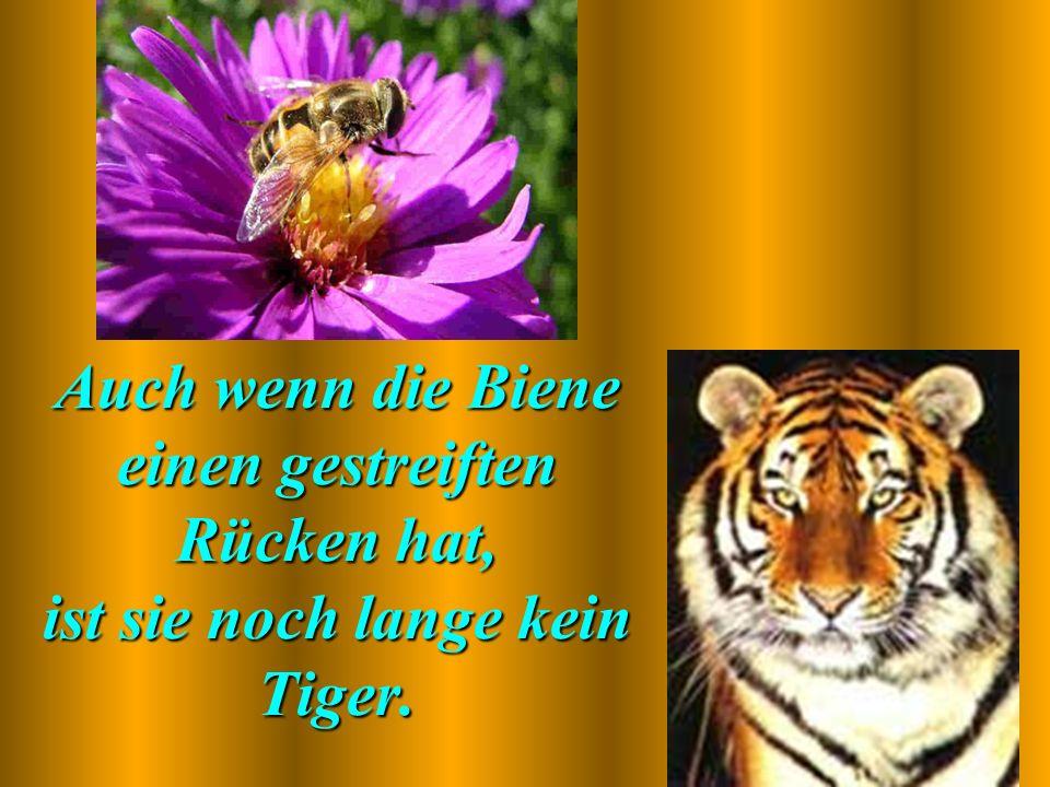 Auch wenn die Biene einen gestreiften Rücken hat, ist sie noch lange kein Tiger.