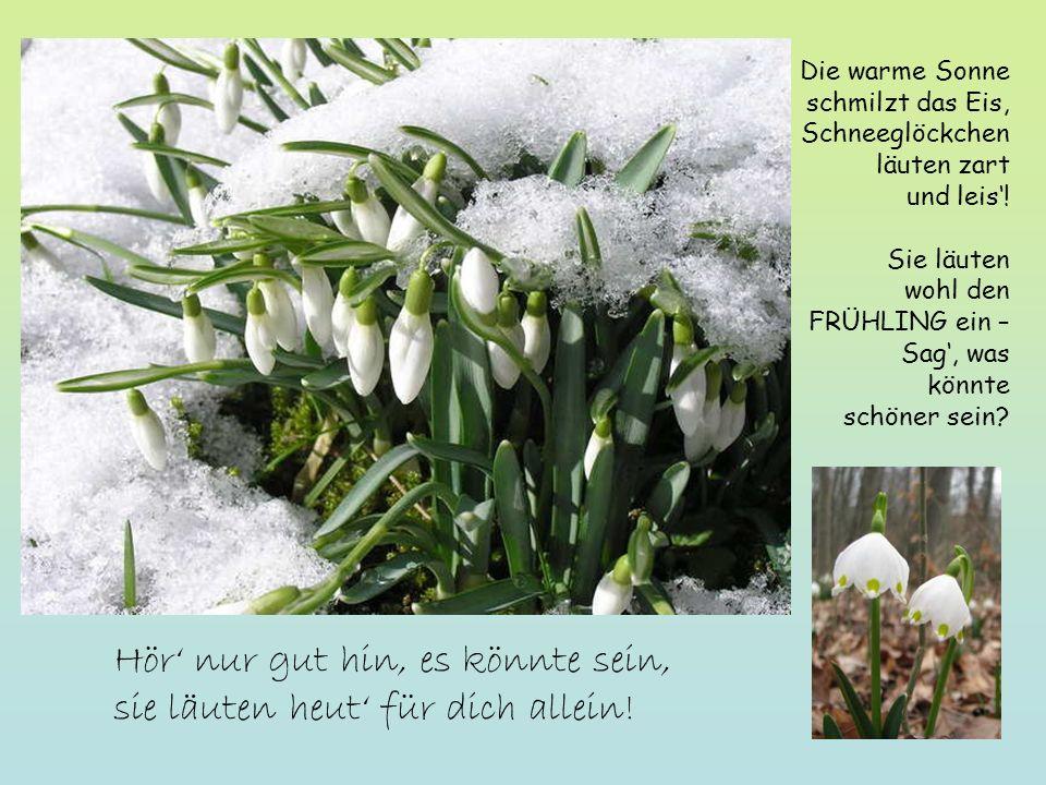 Frühlingsträume und Blütenpracht Bitte klicken