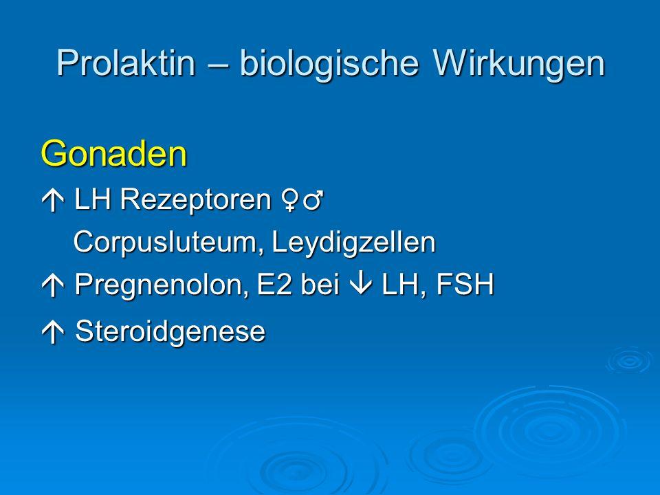 Prolaktin – biologische Wirkungen Gonaden LH Rezeptoren LH Rezeptoren Corpusluteum, Leydigzellen Corpusluteum, Leydigzellen Pregnenolon, E2 bei LH, FS