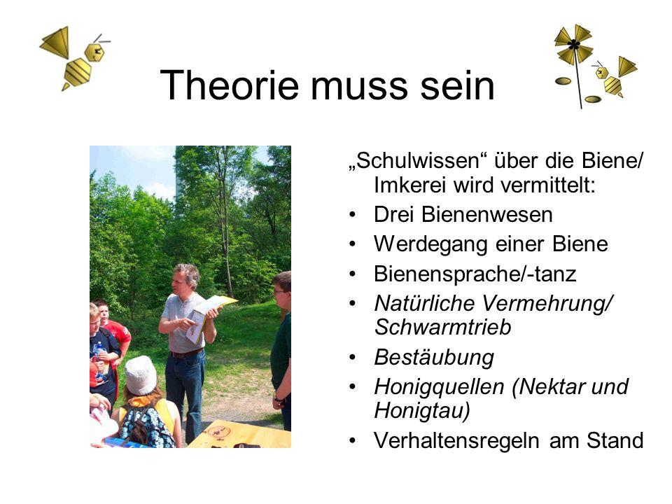 Theorie muss sein Schulwissen über die Biene/ Imkerei wird vermittelt: Drei Bienenwesen Werdegang einer Biene Bienensprache/-tanz Natürliche Vermehrun