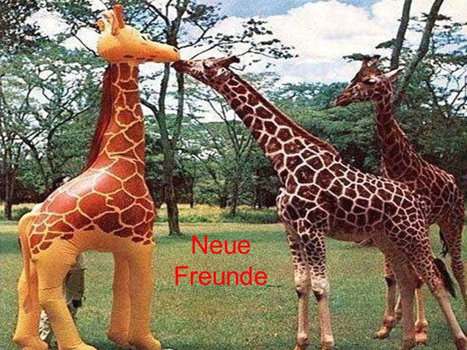 Neue Freunde