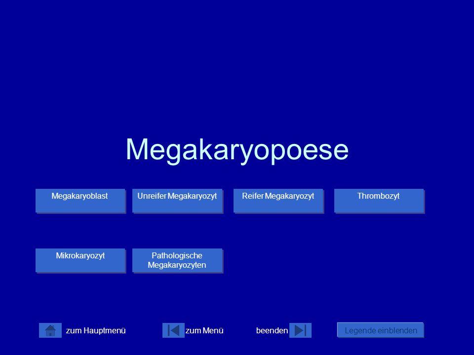 zum Menübeenden Legende einblenden zum Hauptmenü Megakaryopoese Megakaryoblast Thrombozyt Reifer Megakaryozyt Unreifer Megakaryozyt Unreifer Megakaryo