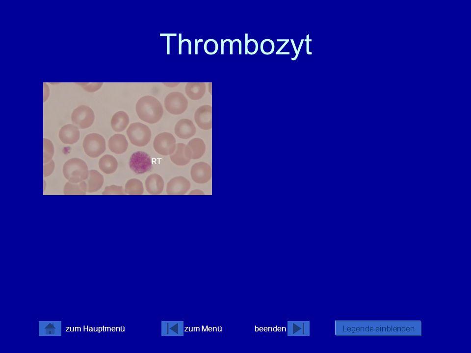 zum Menübeenden Legende einblenden zum Hauptmenü Thrombozyt RT