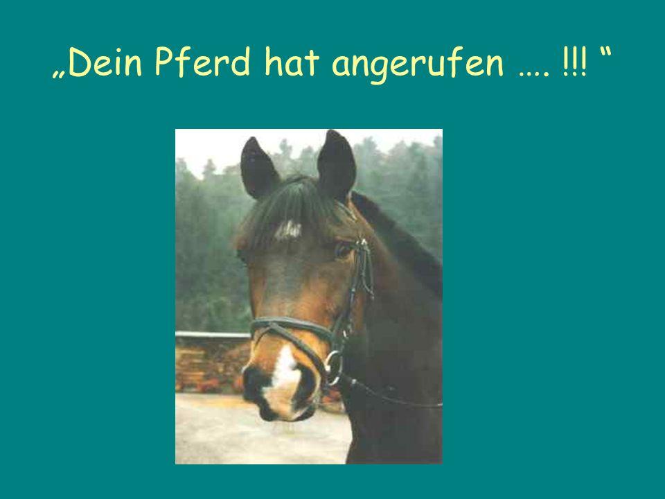 Dein Pferd hat angerufen …. !!!