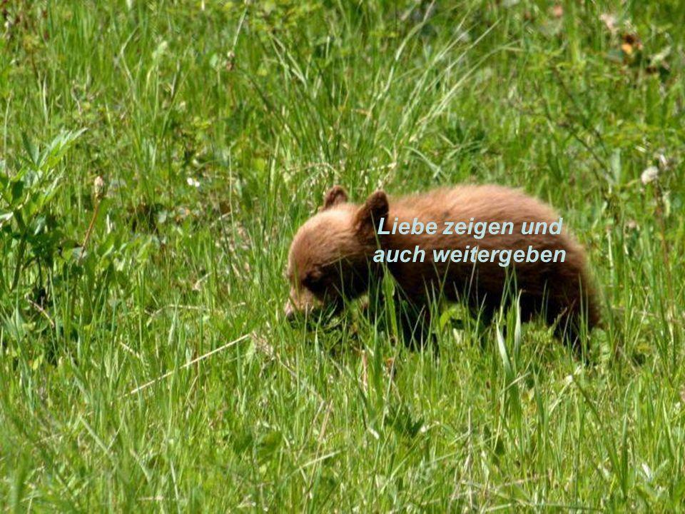Stark sein wie ein Bär/in Durch nichts unterkriegen lassen