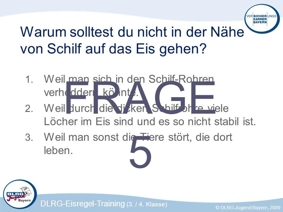 DLRG-Eisregel-Training (3. / 4. Klasse) © DLRG-Jugend Bayern, 2009 Warum solltest du nicht in der Nähe von Schilf auf das Eis gehen? 1. Weil man sich