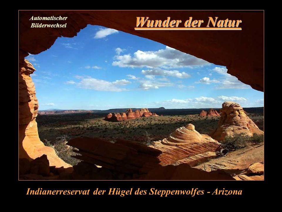 Wunder der Natur Indianerreservat der Hügel des Steppenwolfes - Arizona Automatischer Bilderwechsel