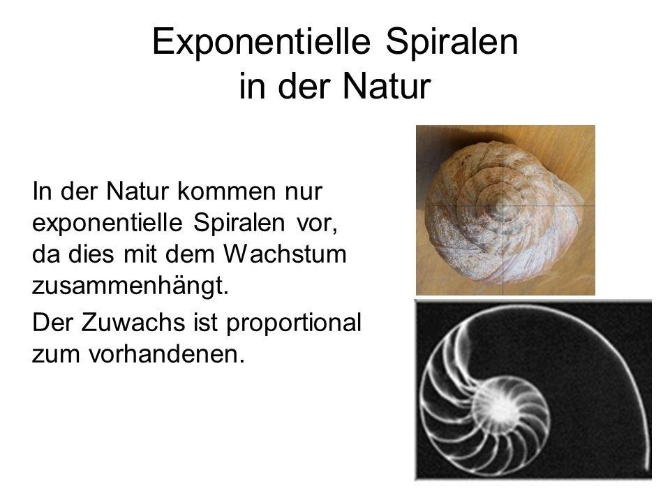 Exponentielle Spiralen in der Natur In der Natur kommen nur exponentielle Spiralen vor, da dies mit dem Wachstum zusammenhängt. Der Zuwachs ist propor