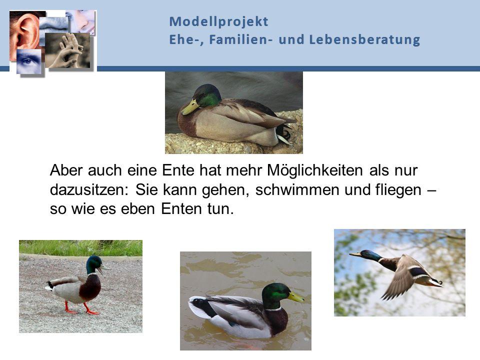 Aber auch eine Ente hat mehr Möglichkeiten als nur dazusitzen: Sie kann gehen, schwimmen und fliegen – so wie es eben Enten tun. Modellprojekt Ehe-, F