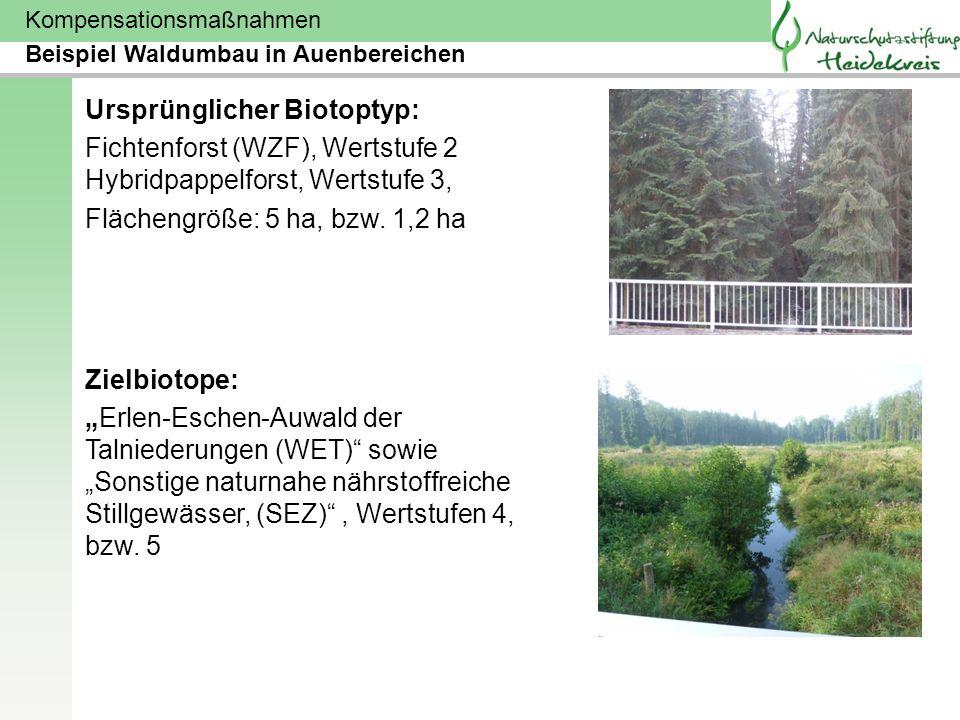 Kompensationsmaßnahmen Ursprünglicher Biotoptyp: Fichtenforst (WZF), Wertstufe 2 Hybridpappelforst, Wertstufe 3, Flächengröße: 5 ha, bzw. 1,2 ha Zielb