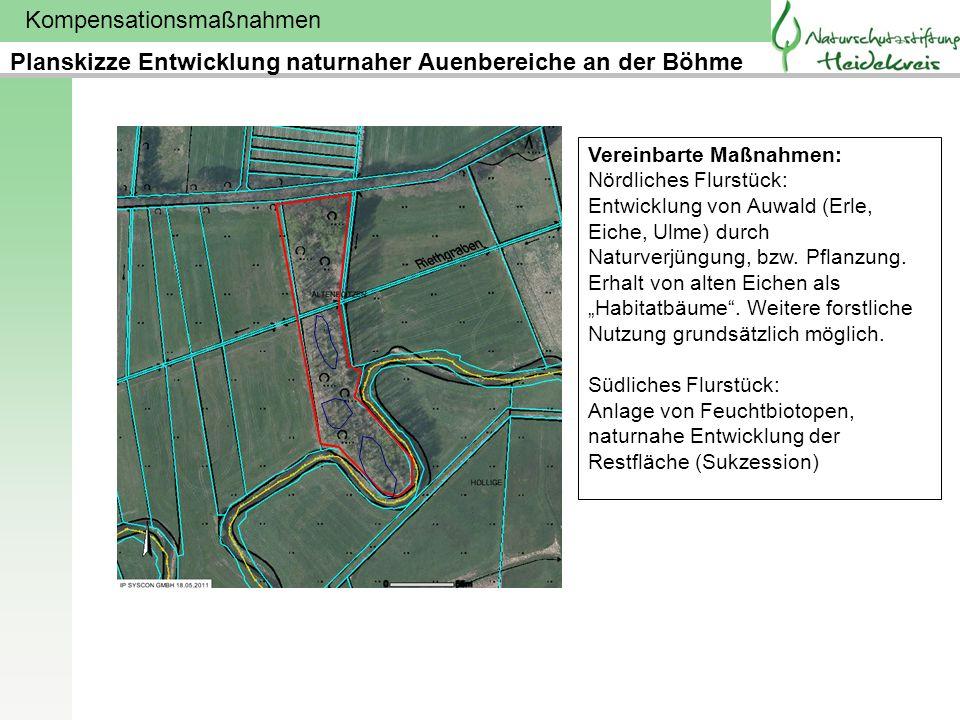 Kompensationsmaßnahmen Planskizze Entwicklung naturnaher Auenbereiche an der Böhme Vereinbarte Maßnahmen: Nördliches Flurstück: Entwicklung von Auwald