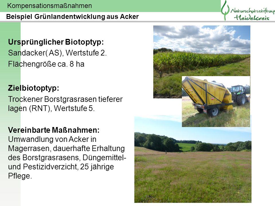 Kompensationsmaßnahmen Ursprünglicher Biotoptyp: Sandacker( AS), Wertstufe 2. Flächengröße ca. 8 ha Zielbiotoptyp: Trockener Borstgrasrasen tieferer l