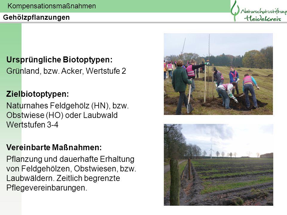 Kompensationsmaßnahmen Ursprüngliche Biotoptypen: Grünland, bzw. Acker, Wertstufe 2 Zielbiotoptypen: Naturnahes Feldgehölz (HN), bzw. Obstwiese (HO) o