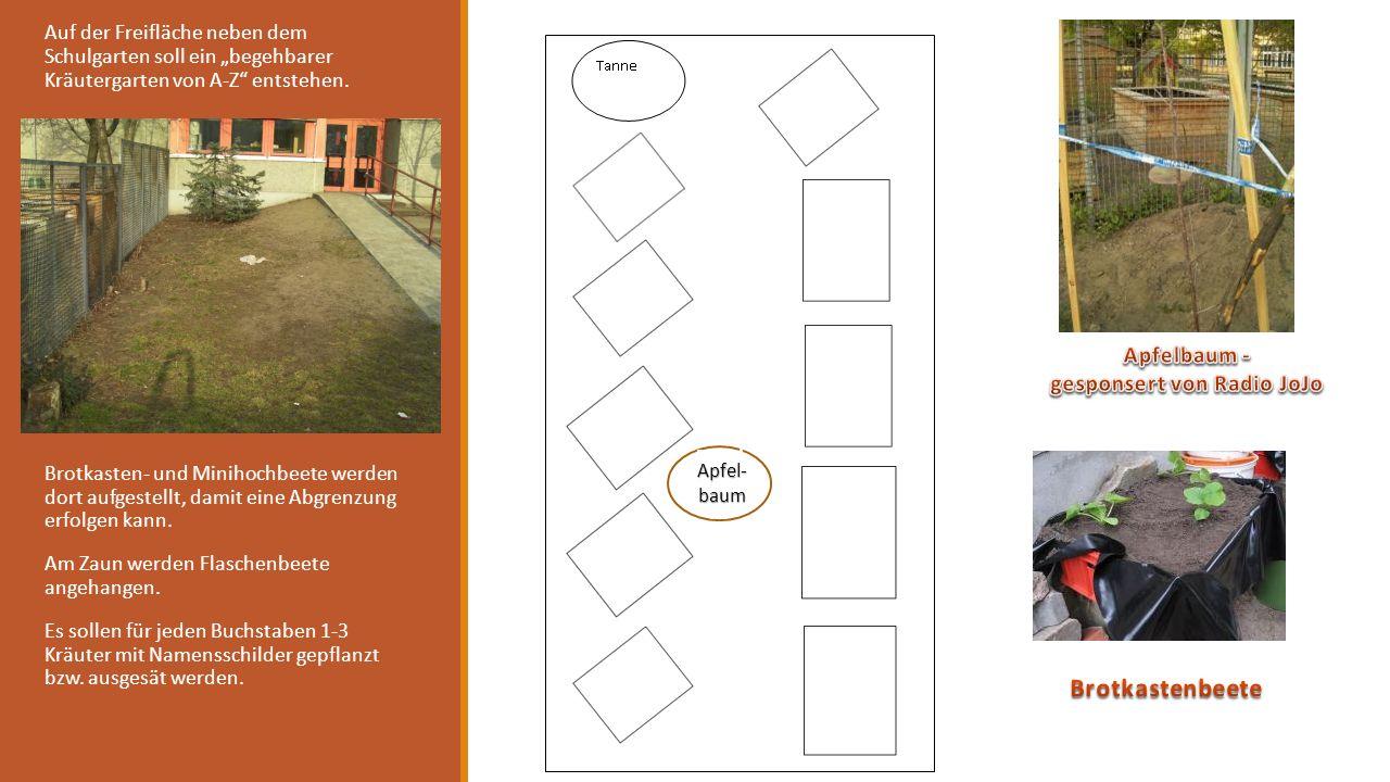 Auf der Freifläche neben dem Schulgarten soll ein begehbarer Kräutergarten von A-Z entstehen. Brotkasten- und Minihochbeete werden dort aufgestellt, d