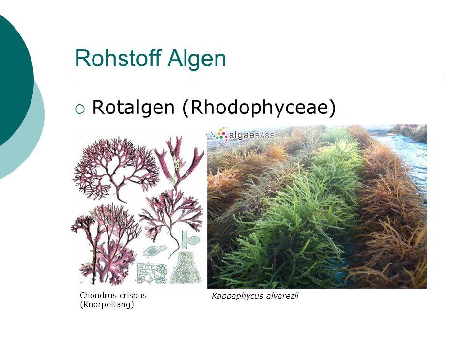 Rohstoff Algen Rotalgen (Rhodophyceae) Chondrus crispus (Knorpeltang) Kappaphycus alvarezii