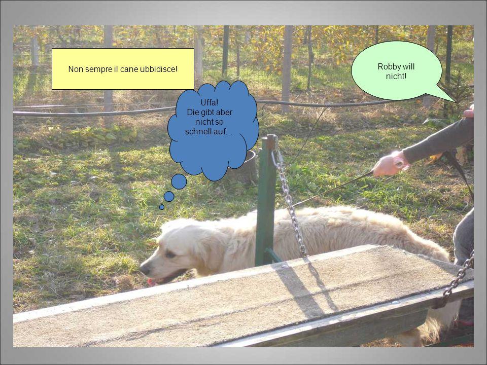 Non sempre il cane ubbidisce! Robby will nicht! Uffa! Die gibt aber nicht so schnell auf…