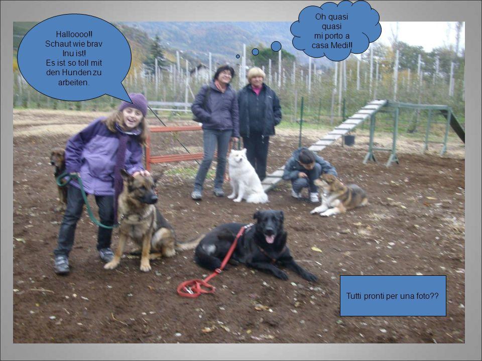 Halloooo!! Schaut wie brav Inu ist! Es ist so toll mit den Hunden zu arbeiten. Tutti pronti per una foto?? Oh quasi quasi mi porto a casa Medi!!