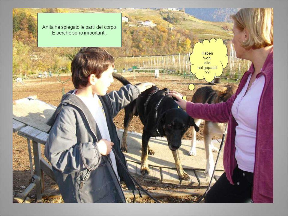 Anita ha spiegato le parti del corpo E perché sono importanti. Haben wohl alle aufgepasst ??