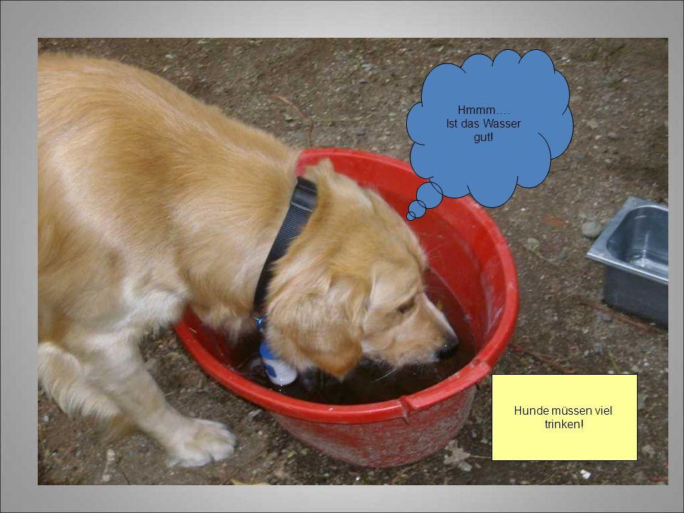 Hunde müssen viel trinken! Hmmm…. Ist das Wasser gut!