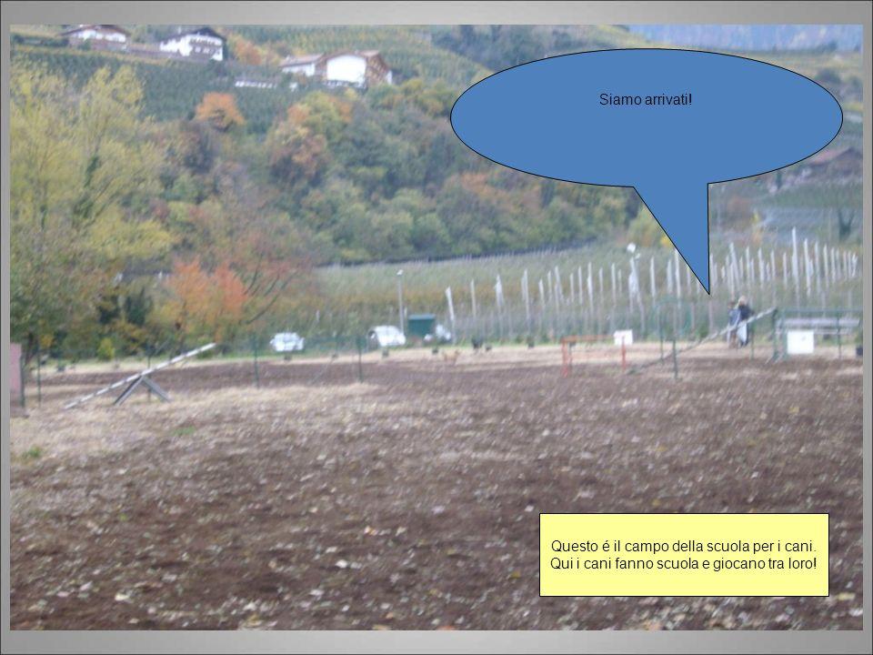 Siamo arrivati! Questo é il campo della scuola per i cani. Qui i cani fanno scuola e giocano tra loro!