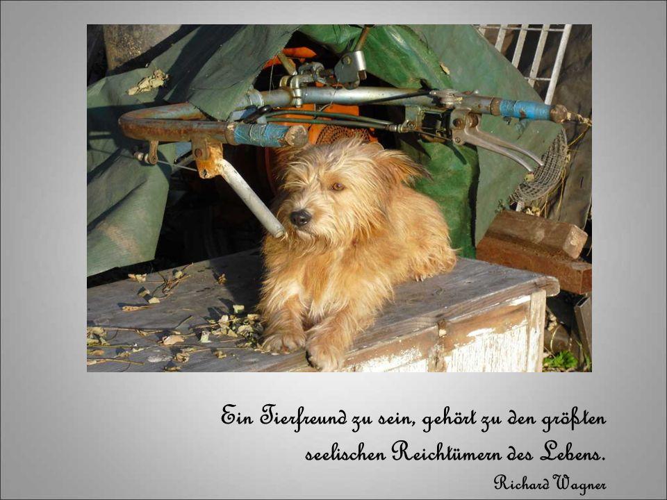 Ein Tierfreund zu sein, gehört zu den größten seelischen Reichtümern des Lebens. Richard Wagner