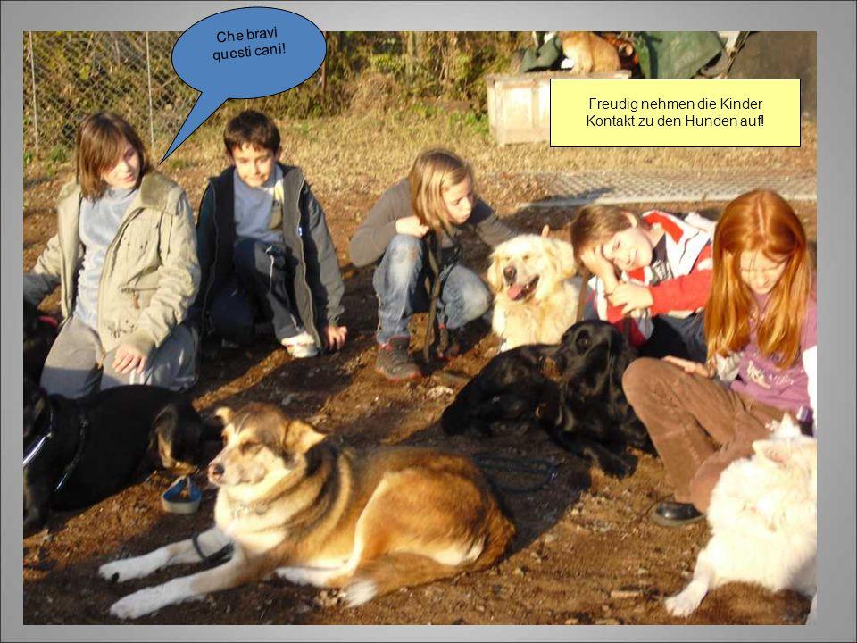 Freudig nehmen die Kinder Kontakt zu den Hunden auf! Che bravi questi cani!