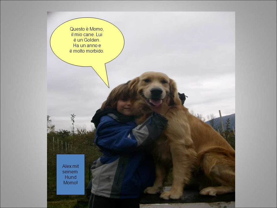 Questo è Momo, il mio cane. Lui é un Golden. Ha un anno e é molto morbido. Alex mit seinem Hund Momo!