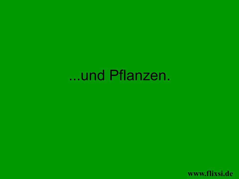 ...und Pflanzen. www.flixsi.de