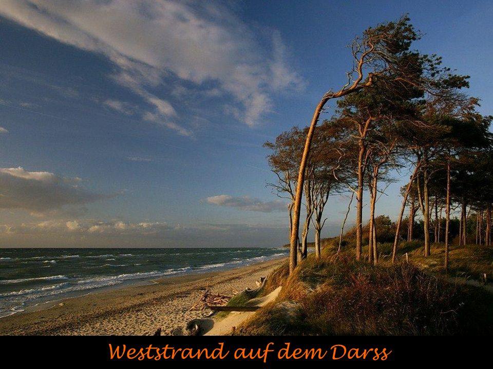 Westerhever