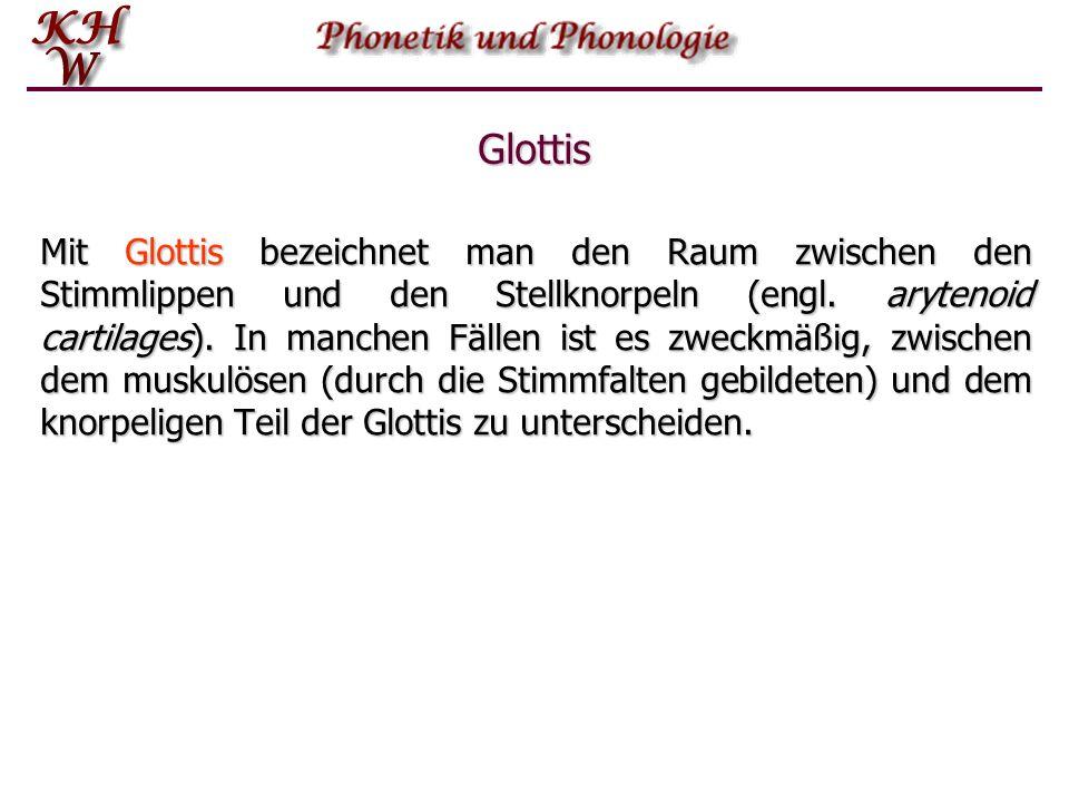 Glottis Mit Glottis bezeichnet man den Raum zwischen den Stimmlippen und den Stellknorpeln (engl. arytenoid cartilages). In manchen Fällen ist es zwec