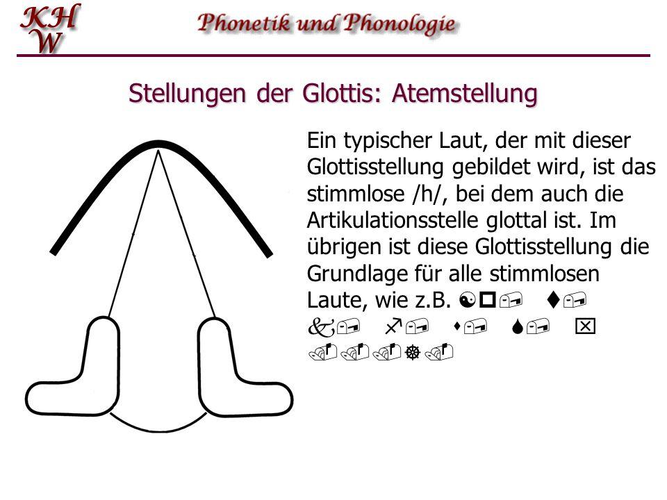 Stellungen der Glottis: Atemstellung Ein typischer Laut, der mit dieser Glottisstellung gebildet wird, ist das stimmlose /h/, bei dem auch die Artikul
