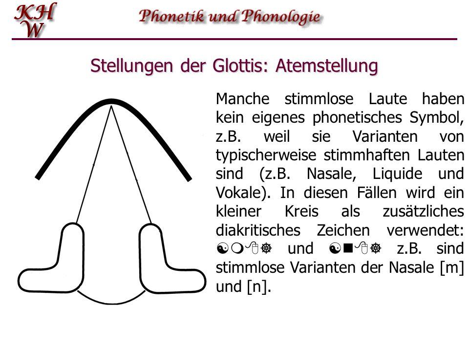 Stellungen der Glottis: Atemstellung Manche stimmlose Laute haben kein eigenes phonetisches Symbol, z.B. weil sie Varianten von typischerweise stimmha