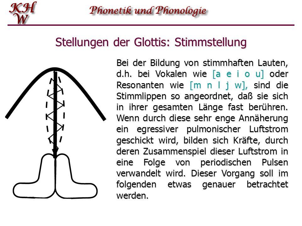 Stellungen der Glottis: Stimmstellung Bei der Bildung von stimmhaften Lauten, d.h. bei Vokalen wie [a e i o u] oder Resonanten wie [m n l j w], sind d