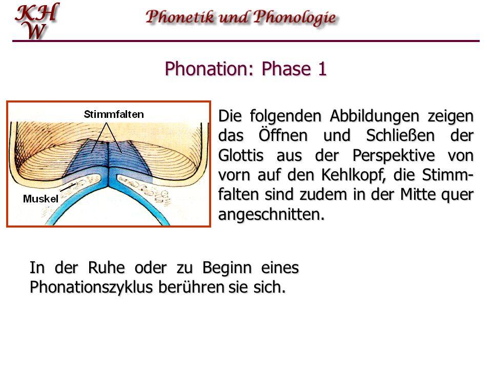 Phonation: Phase 1 Die folgenden Abbildungen zeigen das Öffnen und Schließen der Glottis aus der Perspektive von vorn auf den Kehlkopf, die Stimm- fal