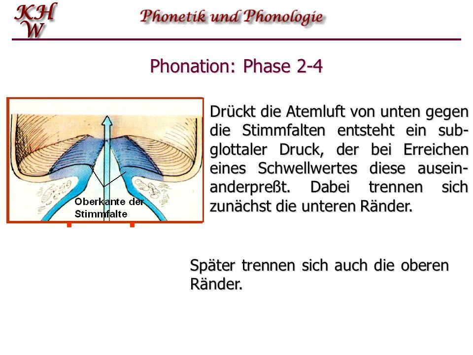 Phonation: Phase 2-4 Drückt die Atemluft von unten gegen die Stimmfalten entsteht ein sub- glottaler Druck, der bei Erreichen eines Schwellwertes dies