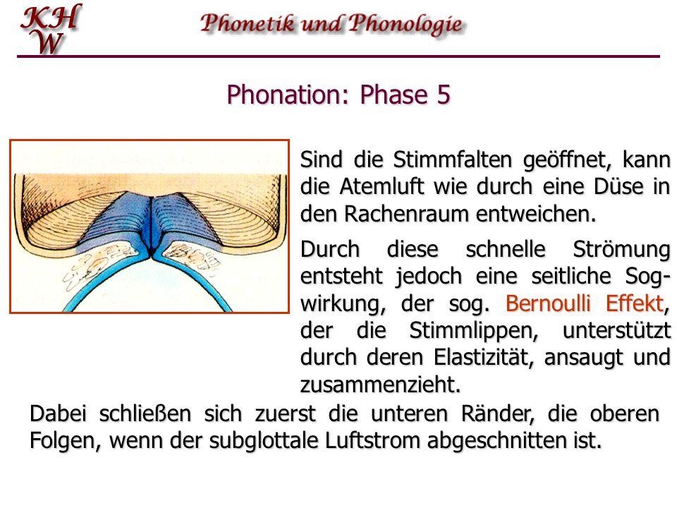 Phonation: Phase 5 Sind die Stimmfalten geöffnet, kann die Atemluft wie durch eine Düse in den Rachenraum entweichen. Durch diese schnelle Strömung en