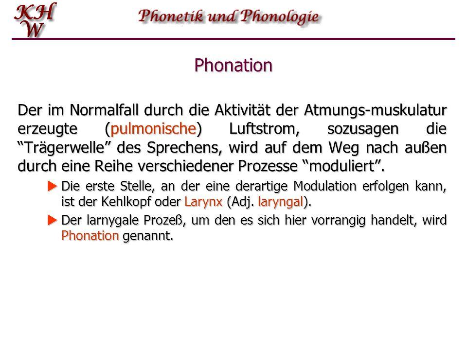 Phonation Der im Normalfall durch die Aktivität der Atmungs-muskulatur erzeugte (pulmonische) Luftstrom, sozusagen die Trägerwelle des Sprechens, wird