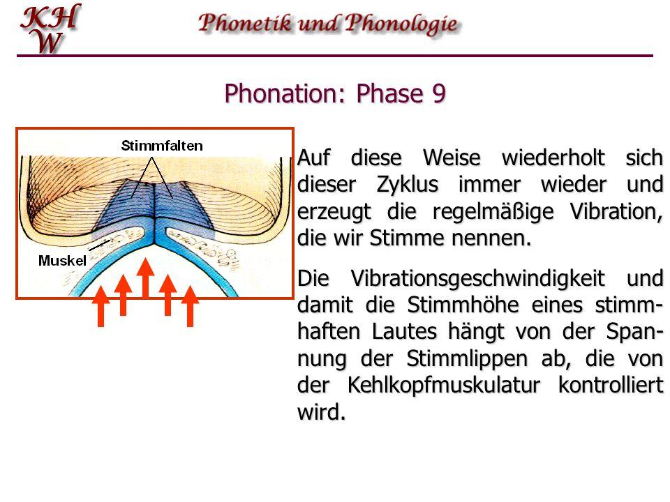 Phonation: Phase 9 Auf diese Weise wiederholt sich dieser Zyklus immer wieder und erzeugt die regelmäßige Vibration, die wir Stimme nennen. Die Vibrat