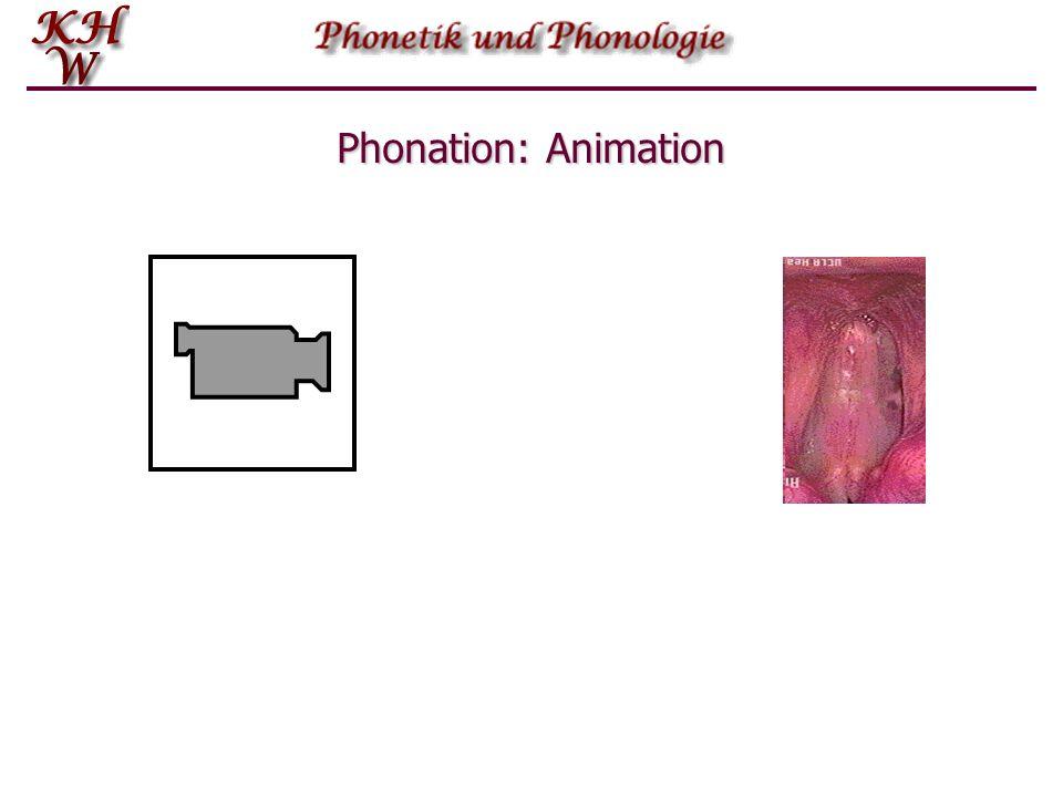 Phonation: Animation