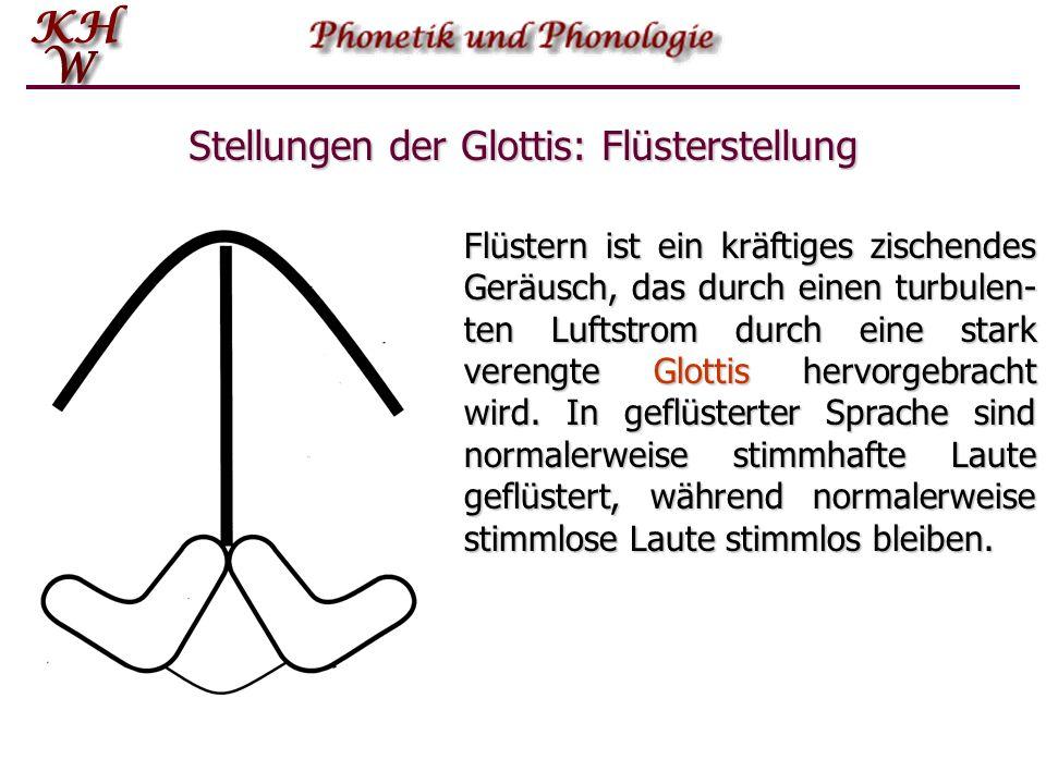 Stellungen der Glottis: Flüsterstellung Flüstern ist ein kräftiges zischendes Geräusch, das durch einen turbulen- ten Luftstrom durch eine stark veren