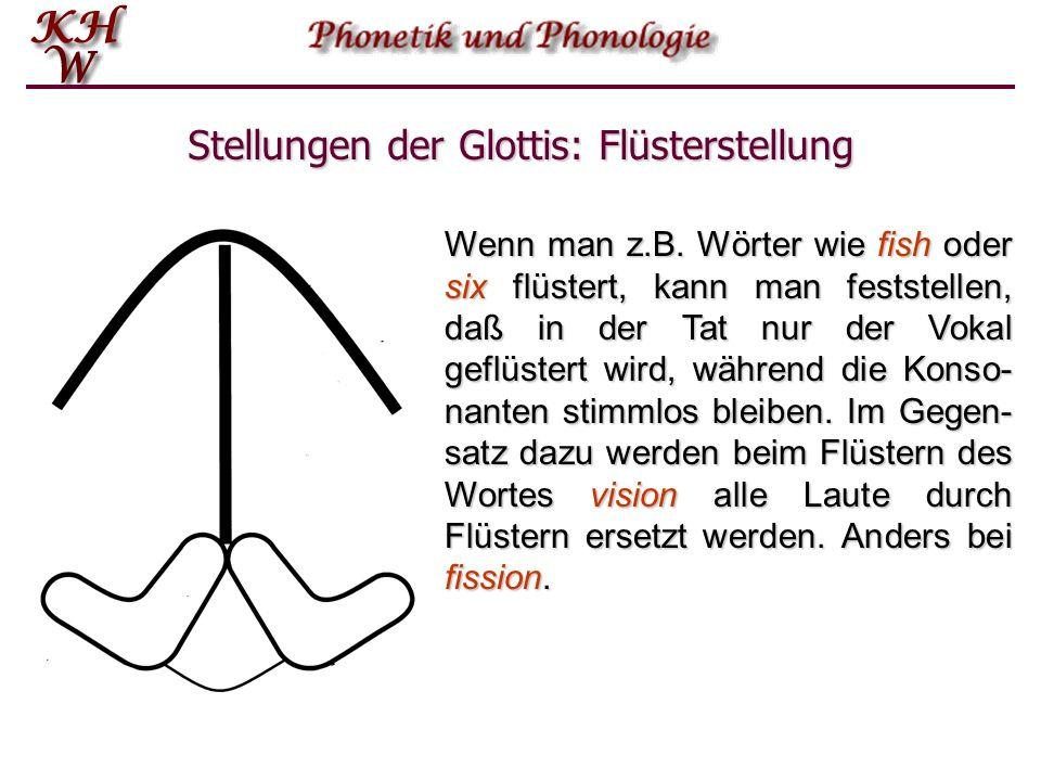 Stellungen der Glottis: Flüsterstellung Wenn man z.B. Wörter wie fish oder six flüstert, kann man feststellen, daß in der Tat nur der Vokal geflüstert