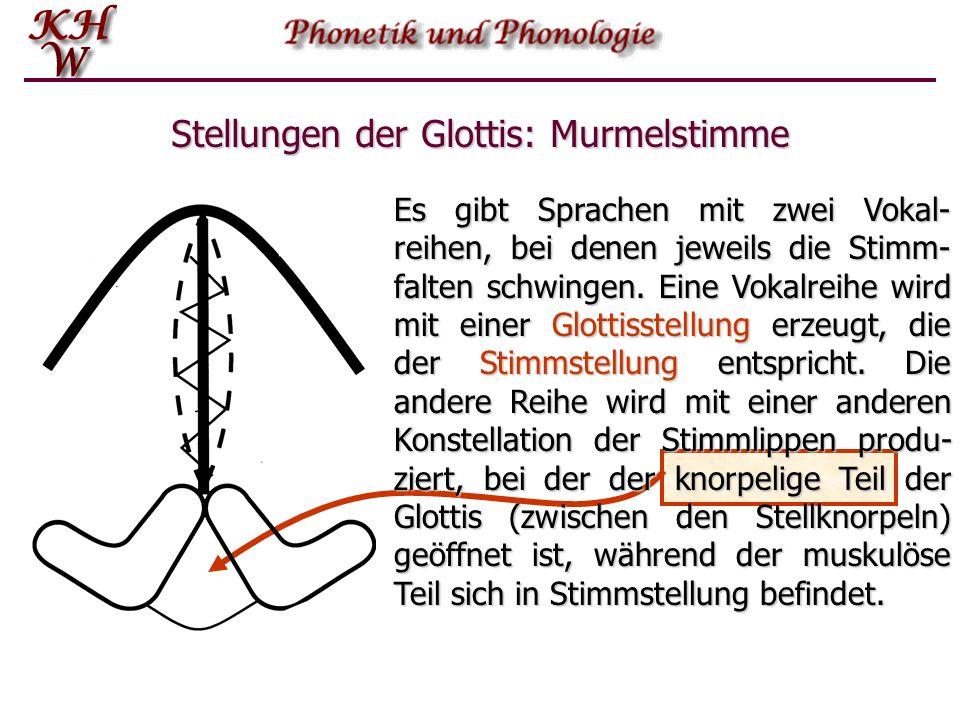 Stellungen der Glottis: Murmelstimme Es gibt Sprachen mit zwei Vokal- reihen, bei denen jeweils die Stimm- falten schwingen. Eine Vokalreihe wird mit