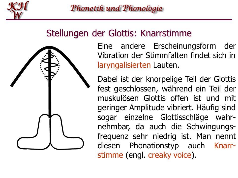 Stellungen der Glottis: Knarrstimme Eine andere Erscheinungsform der Vibration der Stimmfalten findet sich in laryngalisierten Lauten. Dabei ist der k