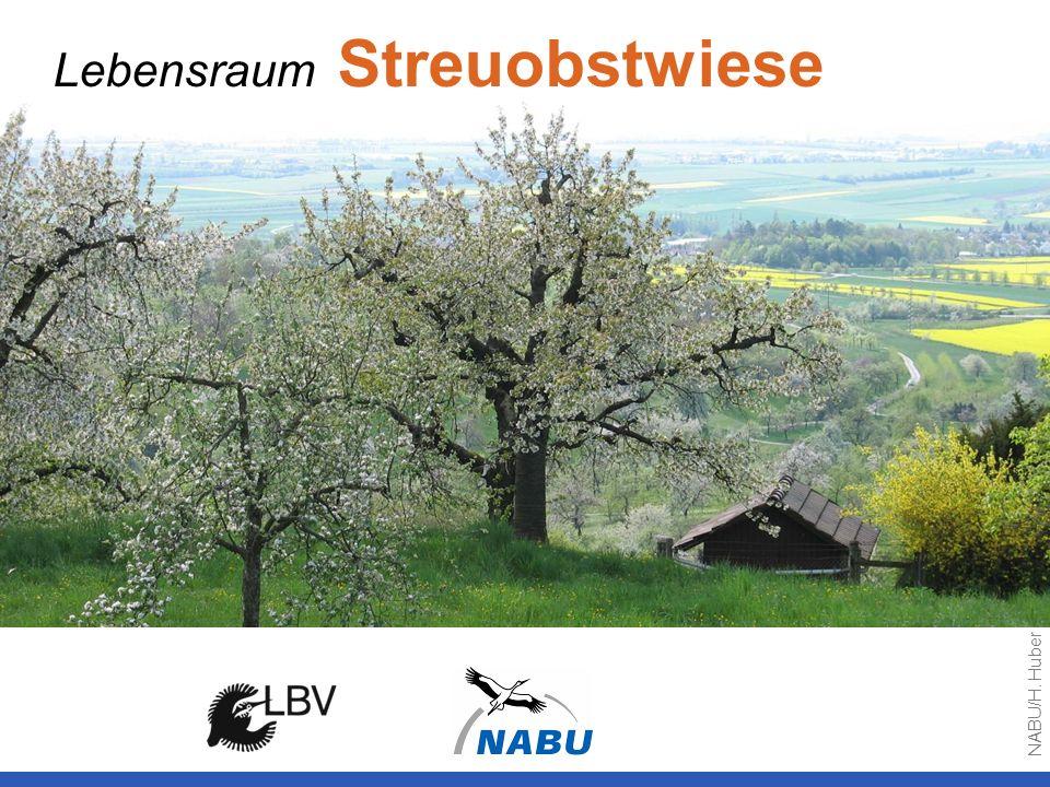 Lebensraum Streuobstwiese NABU/H. Huber