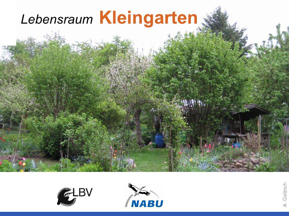 Lebensraum Kleingarten A. Gaitzsch