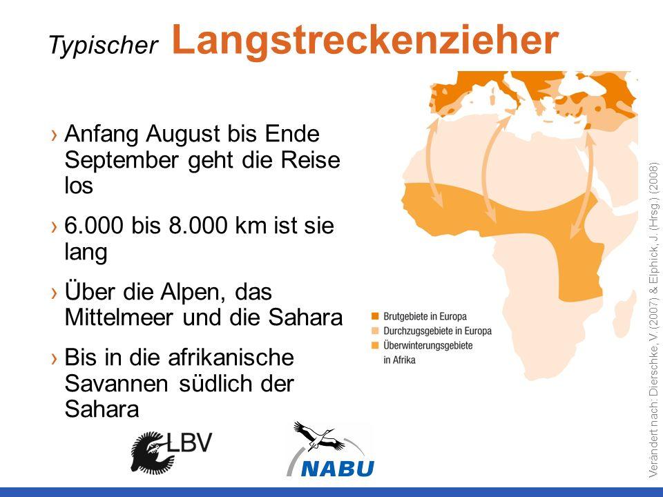 Typischer Langstreckenzieher Anfang August bis Ende September geht die Reise los 6.000 bis 8.000 km ist sie lang Über die Alpen, das Mittelmeer und di